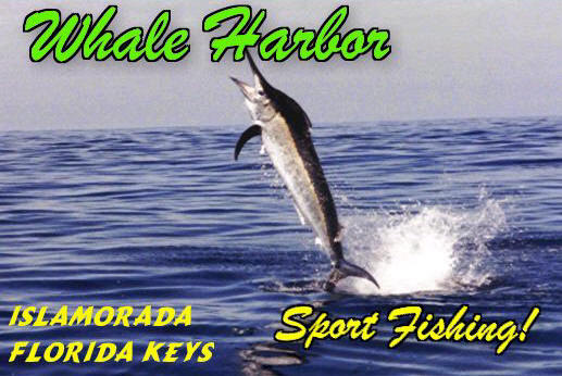 Florida Keys FISHING charters and Florida Keys Fishing reports.